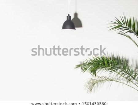 Naturale rami evergreen tropicali Palm impianto Foto d'archivio © artjazz