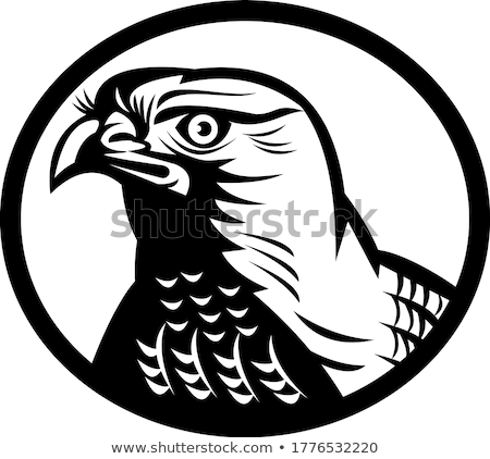 Head of a Northern Goshawk a Medium-Large Diurnal Raptor Oval Retro Woodcut Black and White Stock photo © patrimonio