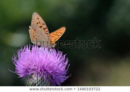 высокий · коричневый · сидят · цветок · трава · бабочка - Сток-фото © vintrom