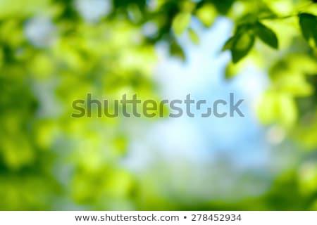 sunny illuminated green vegetation Stock photo © prill