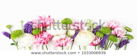 Flower Borders - 8 Stock photo © adamson