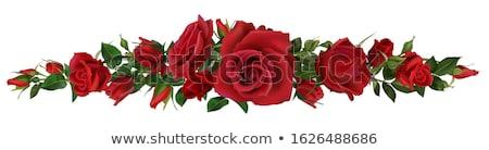 meghívó · elegáns · vörös · rózsák · fehér · kártya · sarok - stock fotó © marimorena