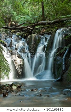 Melbourne Austrália árvore árvores rocha Foto stock © 3523studio