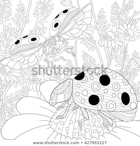 Levél bogár nyár idő piros perem Stock fotó © prill
