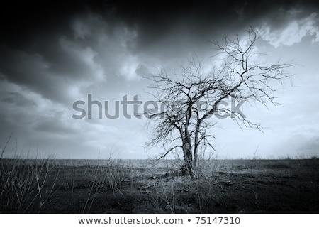 Landschaft toter Baum grünen Süden Deutschland tot Stock foto © gewoldi