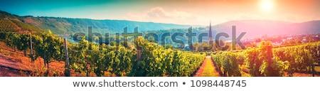 vineyard in the Eifel Stock photo © prill