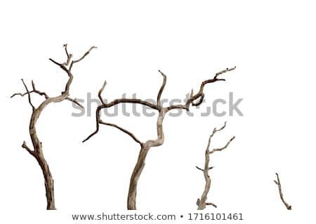 пейзаж · одиноко · высушите · дерево · драматический · Blue · Sky - Сток-фото © simply