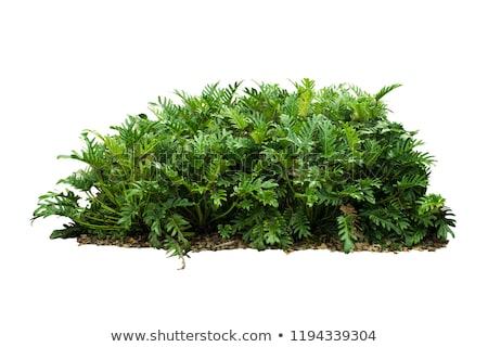 Arbres herbe silhouettes bois Photo stock © ntnt