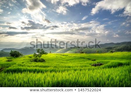 Foto stock: Casa · de · campo · montanha · Tailândia · norte · céu · árvore