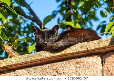 macska · ül · beton · kerítés · szögesdrót · tavasz - stock fotó © ultrapro