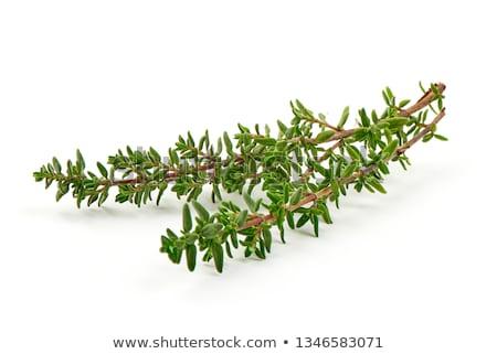 fresh green aromatc thyme herb macro Stock photo © juniart