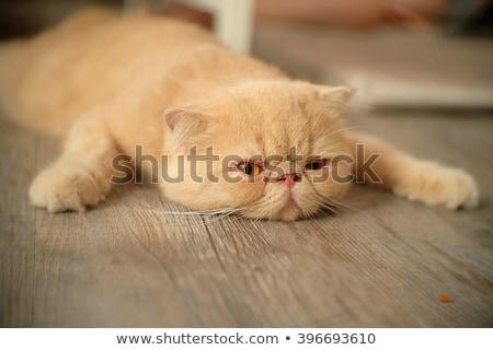 Leniwy kot zielona trawa twarz zielone czarny Zdjęcia stock © badmanproduction