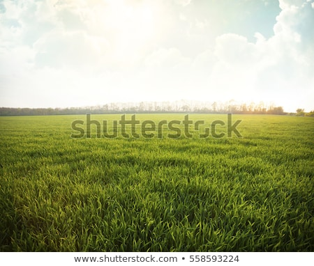 grass field with cloudy sky Stock photo © almir1968