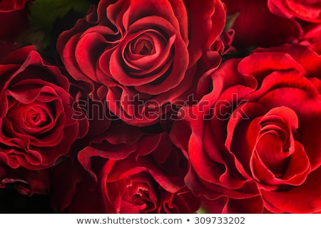 bridal bouquet of red roses stock photo © jrstock