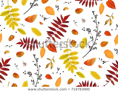 Autumn card with red rowan berry and maple leaves, vector illustration Stock photo © carodi