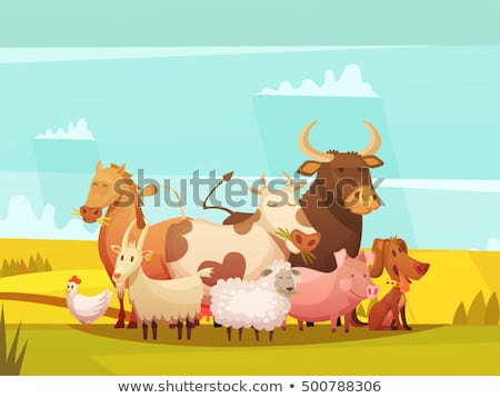 Chickens and sheep grazing on organic farm Stock photo © elenaphoto