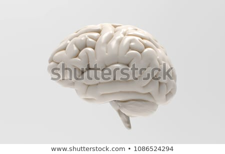 cerveau · 3d · illustration · technologie · art · médecine · bleu - photo stock © Leonardi