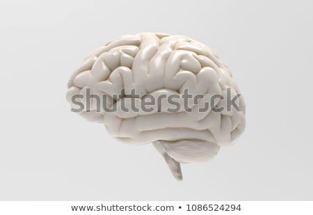cérebro · ilustração · 3d · tecnologia · arte · medicina · azul - foto stock © Leonardi