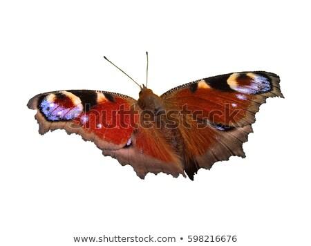 Paw Motyl niebieski morza kwiat Zdjęcia stock © tainasohlman
