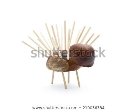 Kasztan żołądź drewniany stół selektywne focus płytki Zdjęcia stock © MKucova