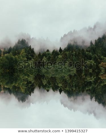 Hazy Forest Stock photo © jamdesign