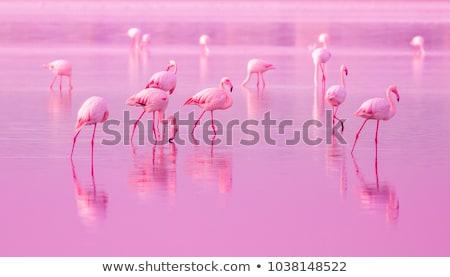 Stock photo: pink flamingos at the Lake