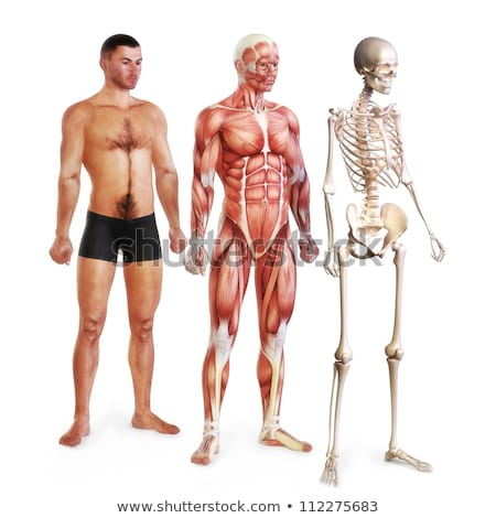 female anatomy 3d body muscle skeleton stock photo © eyeidea