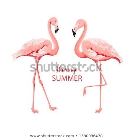 pembe · örnek · kuş · gündoğumu · göl · siluet - stok fotoğraf © alex_grichenko