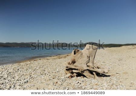 Zgniły korzeń plaży starych niebo Zdjęcia stock © meinzahn