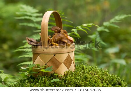 Vers ruw champignons onlangs verweerde houten tafel Stockfoto © olandsfokus