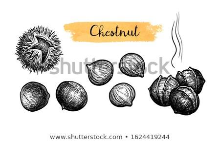 Sweet chestnuts collection on white Stock photo © olandsfokus