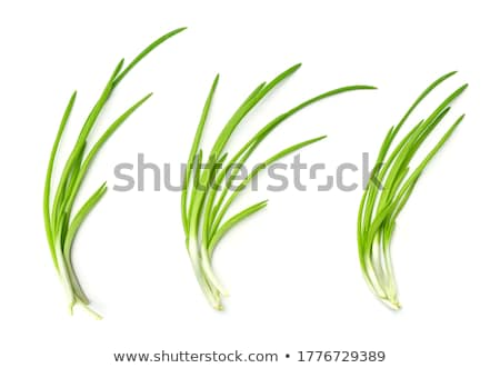 Verde cebollino macro tiro aislado Foto stock © PixelsAway