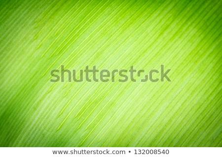 banán · zöld · napos · levél · konzerv · víz - stock fotó © art9858