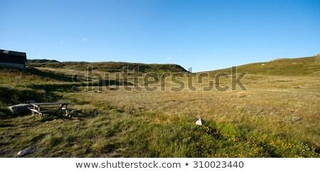 montanha · planalto · Noruega · neve · verão · rocha - foto stock © slunicko