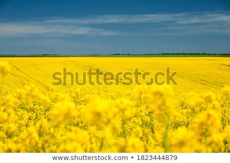 весна яркий сельский цветы пейзаж саду Сток-фото © JanPietruszka