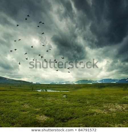 Spring in the mountains and stormy sky Stock photo © Kotenko