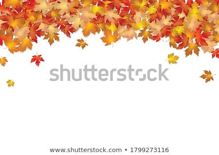 autumn dry leaf of red oak tree stock photo © shutswis
