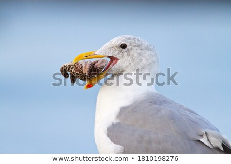 Pena gaivota praia areia céu água Foto stock © CaptureLight