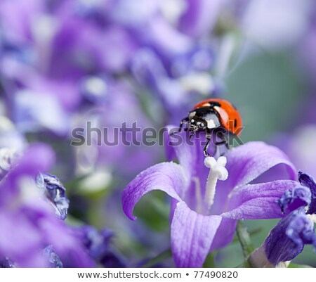 a pot with blooming flowers and a ladybug stock photo © bluering
