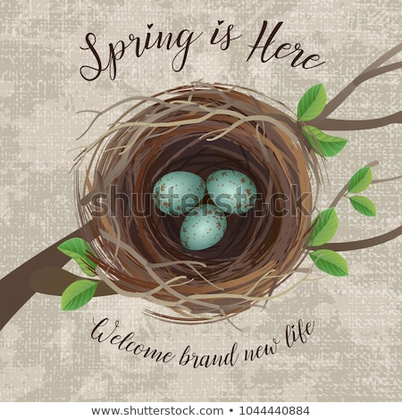 Stock foto: Grunge Bird Eggs In Nest