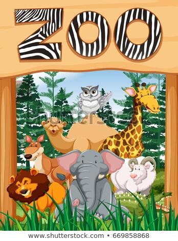 giraffe · bos · cartoon · frame · bladeren · bos - stockfoto © bluering