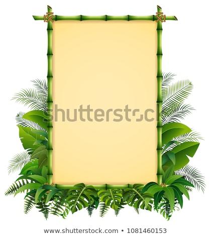 vektor · zöld · bambusz · ág · fű · absztrakt - stock fotó © kup1984