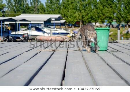 свежие рыбы удочка ковша пластиковых спорт Сток-фото © IMaster