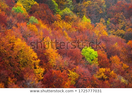 Autumn landscape with deciduous forest and views of the mountain Stock photo © Kotenko