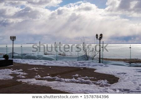 świetle śnieg za suszy trawy zamrożone Zdjęcia stock © Mps197