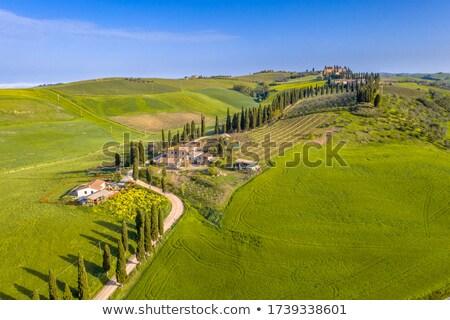 トスカーナ イタリア 表示 木 美 山 ストックフォト © boggy