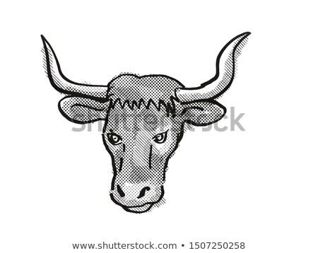 Ankole-Watusi Cartoon Retro Drawing Stock photo © patrimonio