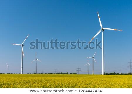 Modern wind turbines and flowering oilseed rape Stock photo © elxeneize