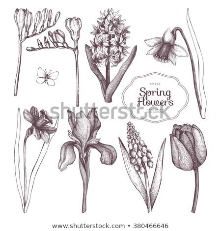 Narcissen hyacint bloemen vers Blauw Stockfoto © neirfy