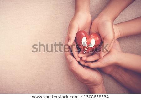 Wereld nier dag gelukkig cartoon Stockfoto © yupiramos